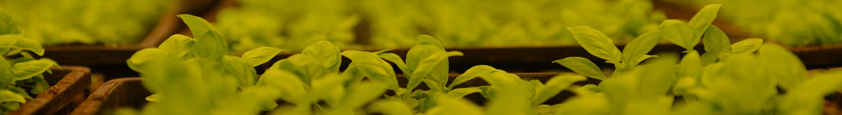 Agriculture-urbaine-Milwaukee-©-Gembloux-Agro-Bio-Tech-7