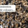 La mortalité de l'abeille