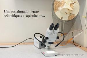 Collaboration_scientifiques_apiculteurs