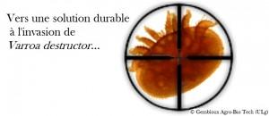 Varroa+cible-solution-durable