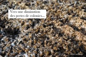 Pertes_de_colonies_abeilles-diminution