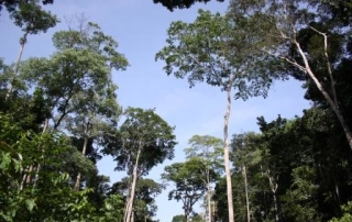 Forest_Cameroon